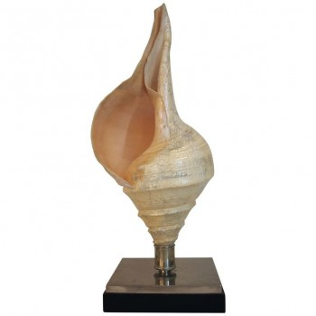Anthony Redmile, Seashell Lamp, Signed, circa 1970, France
